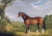 Horse Farm Framed Prints - A Clydesdale Stallion Framed Print by John Frederick Herring Snr