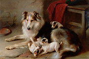 Playful Dog Prints - A Collie with Fox Terrier Puppies Print by Walter Hunt