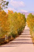 Autumn Prints Metal Prints - A Colorful Country Road Rocky Mountain Autumn View  Metal Print by James Bo Insogna