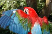 Macaw Photos - A Colorful Macaw by Stacy Gold