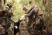 Bonding Art - A Combat Tracking Dog Subdues A Mock by Stocktrek Images