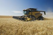 Careers Posters - A Combine Harvests Durum Wheat Poster by Dave Reede