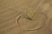 Botanical Beach Prints - A Compass in the Sand Print by Susan Candelario