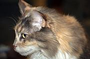 Cats Originals - A Contemplative Little Princess by Kenneth Albin