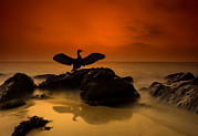 Perching Framed Prints - A Cormorant Lands On A Rock Framed Print by Josh Exell/National Geographic My Shot