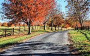 Fences Prints - A Country Drive Print by JC Findley