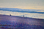 Sea Shore Digital Art - A Couple of Birds by Bill Cannon