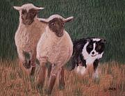 Sheep Pastels Framed Prints - A Couple of Strays Framed Print by Jan Amiss