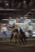 Rodeos Photo Posters - A Cowboy Rides A Bucking Bronco Poster by Taylor S. Kennedy