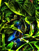 Paint Photograph Posters - A Crab in the Bush... Poster by Sarita Rampersad