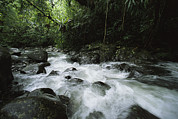 Woodland Scenes Photo Posters - A Creek Rushing Through A Woodland Poster by Tim Laman
