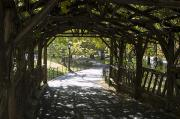 Central Park Prints - A Curved Walkway In Central Park Print by Stacy Gold