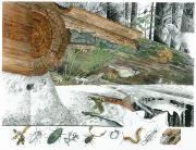 Fir Trees Posters - A Cutaway Painting Of The Ecosystem Poster by Jack Unruh