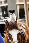 Sandpoint Photos - A Cute Little Dog Riding A Horse In Idaho by Patrick Orton