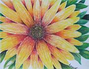Texture Floral Drawings Framed Prints - A Daisy Framed Print by Annie Back