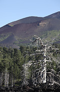 Bare Trees Prints - A Dead Tree Amongst The Volcanic Print by Richard Roscoe