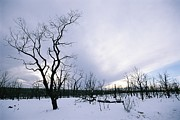 Silhouettes Metal Prints - A Desolate, Snowy Winter Landscape Metal Print by Rich Reid