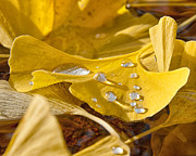 Yellow Leaves Framed Prints - A Dew Dew Dew Framed Print by James Rowland