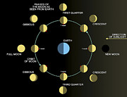 Waning Gibbous Moon Posters - A Diagram Showing The Phases Poster by Ron Miller