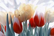 Tulips Posters - A different way Poster by Kristin Kreet