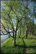 Woodland Scenes Posters - A Dirt Path Winds Through A Waterside Poster by Skip Brown