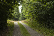Dirt Road Posters - A Dirt Road Leading Out Of A Forest In Maine Poster by Jake Wyman