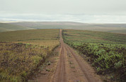 Fields Photo Prints - A Dirt Road Leading To The Horizon Print by Bill Curtsinger