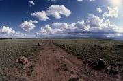 Dirt Roads Photos - A Dirt Road Leads The Eye Over Arid by George Grall