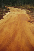 Dirt Roads Photos - A Dirt Road Traveling Through A Forest by Raymond Gehman