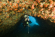 Malapascua Island Photos - A Diver Explores A Cavern With Orange by Tim Laman