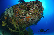 Wreck Prints - A Diver Under The Coral Encrusted Stern Print by Steve Jones