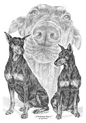 Pinscher Drawings Posters - A Doberman Knows - Dobe Pinscher Art Print Poster by Kelli Swan