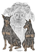 Pinscher Drawings Posters - A Doberman Knows - Dobe Pinscher Dog Art Print Poster by Kelli Swan