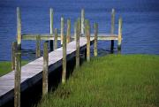 Fenwick Island Posters - A Dock In The Bay Poster by Stacy Gold