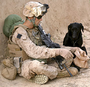 Assault Rifles Photo Framed Prints - A Dog Handler Gives Water To His Dog Framed Print by Stocktrek Images