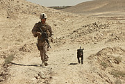 Dog Walking Posters - A Dog Handler Walks With An Explosives Poster by Stocktrek Images