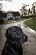 Gravel Road Prints - A Dog In Front Of A House, Skane, Sweden Print by Johner Images