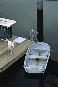 Nautical Structures Photos - A Dog Waits On A Dock Near A Small Row by Raymond Gehman