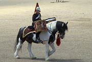 Dress Uniform Posters - A Drum Horse Of The Household Cavalry Poster by Andrew Chittock