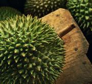 One Point Perspective Art - A Durian Fruit - Popular In South East by Justin Guariglia