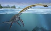 A Elasmosaurus Platyurus Swims Freely Print by Sergey Krasovskiy