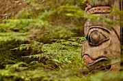 Sitka Framed Prints - A Face in the Forest Framed Print by Tim Grams