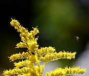 Insects And Crawley Things - A fairy makes a landing. by David Lane