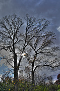 Bare Trees Metal Prints - A Fall Sky Metal Print by David Bearden