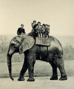 Elephant Drawings Framed Prints - A Farewell Ride on Jumbo from The Illustrated London News Framed Print by English School