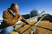 Agricultural Structures Posters - A Farmer Watches As His Corn Is Augered Poster by Joel Sartore