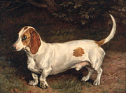 Dachshund Paintings - A Favorite Dachshund by Frank Paton