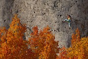 Wild Iris Posters - A Female Climber On A Cliff Wall Poster by Bill Hatcher