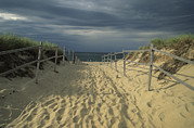 Sand Fences Prints - A Fence-lined Path To The Beach At Cape Print by Michael Melford