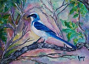 Scrub Jay Paintings - A Fine Feathered Friend by Robin Monroe